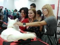 expozitia-felina-sofisticat-2011-romexpo-poze-13