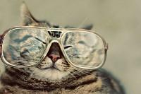 pisicute-cu-ochelari-haioase-01