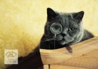 pisicute-cu-ochelari-haioase-02
