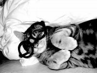 pisicute-cu-ochelari-haioase-04