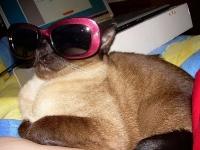 pisicute-cu-ochelari-haioase-05