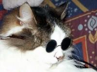 pisicute-cu-ochelari-haioase-06