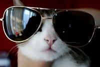 pisicute-cu-ochelari-haioase-07