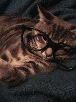 pisicute-cu-ochelari-haioase-08