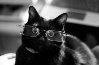 pisicute-cu-ochelari-haioase-09