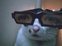 pisicute-cu-ochelari-haioase-10