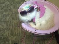 pisicute-cu-ochelari-haioase-11