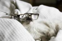pisicute-cu-ochelari-haioase-12