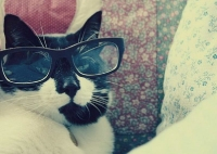pisicute-cu-ochelari-haioase-14