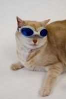 pisicute-cu-ochelari-haioase-15