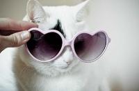 pisicute-cu-ochelari-haioase-16