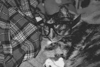 pisicute-cu-ochelari-haioase-17