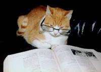 pisicute-cu-ochelari-haioase-18