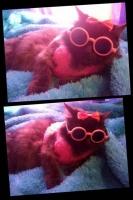 pisicute-cu-ochelari-haioase-19