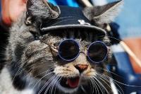 pisicute-cu-ochelari-haioase-20
