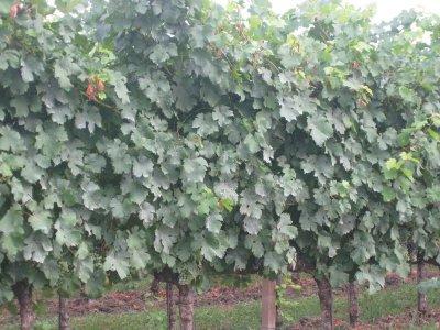 la-tenuta-santome-italy-wine-degustare-05