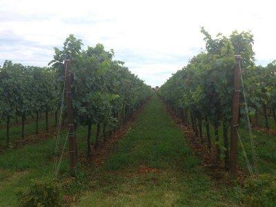 la-tenuta-santome-italy-wine-degustare-07