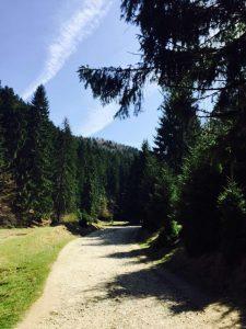 canionul-sapte-scari-damiana- (5)