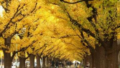 poetul copacule