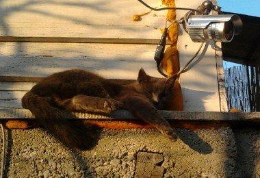 pisica-doarme-in-post-1